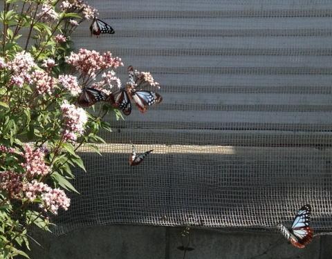 蝶がいっぱい