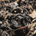 高発酵・高焙煎の黒烏龍茶